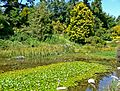 San Francisco Botanical Garden lily pond.jpg