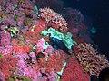 Sanc1670 - Flickr - NOAA Photo Library.jpg