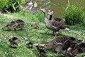Sandringham 23-05-2011 (5760779931).jpg