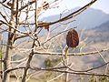 Sano dedri (in Nepali) (5460346127).jpg