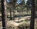 Sanos pinos - panoramio.jpg