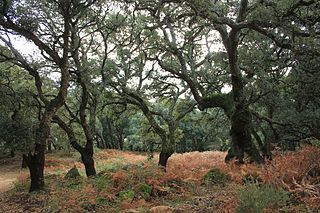 Southwest Iberian Mediterranean sclerophyllous and mixed forests Terrestrial ecoregion in Portugal and Spain