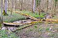 Schlangen - 2015-04-09 - LIP-058 Oesterholzer Bruch (18).jpg