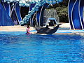 SeaWorld Spectacle09.JPG