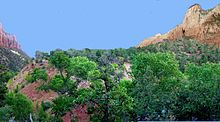 Lobe with trees on top below cliff