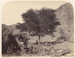 Mount Serbal - Shittah tree, dedicated to the Patron Saint, Wady Feiran