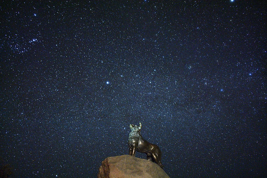 Sheep dog statue, lake Tekapo, stargazing view 1