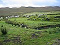 Sheep grazing at Osdale - geograph.org.uk - 576656.jpg