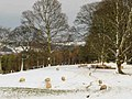 Sheep in the snow - geograph.org.uk - 675906.jpg