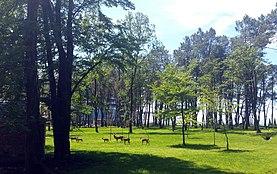 Voormalig premier van Georgië Bidzina Ivanishvili geeft opdracht tot levering van bomen aan het Shekvetili Dendrological Park in Ureki