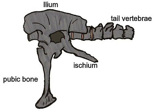 Siamotyrannus