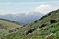 Sierra de Ayllón 1975 09.jpg
