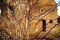 Sint-Catharinakapel met kapelbomen (opgaande linden) - 375108 - onroerenderfgoed.jpg