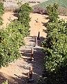 Smudge Pots, Redlands, CA 1-2012 (6808113093).jpg