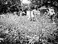 Snapshot, Jungli, Taoyuan, Taiwan, 馬祖新村, 中壢馬祖新村, 隨拍, 中壢, 桃園, 台灣 (15099317621).jpg