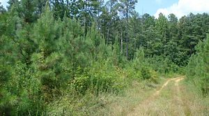 Tree farm - An ATFS-certified tree farm in Virginia provides a variety of habitats for wildlife while producing wood
