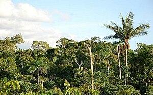熱帯雨林's relation image