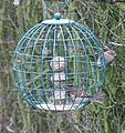 Sparrows1.JPG