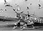 Spitfire 317 sq JH-H birds.jpg