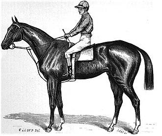 Springbok (horse) - Image: Springbok (horse)