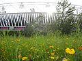 Stadium flowers (7706855360).jpg
