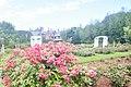 Stan Hywet Gardens (18417805823).jpg