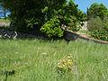 Starý židovský hřbitov v Táboře - SV.jpg
