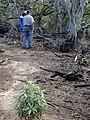 Starr-020118-0031-Myoporum sandwicense-planting area with Kim and Fern-Kanaha pond-Maui (24250401000).jpg