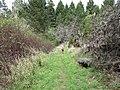 Starr-170225-7040-Rubus niveus-Forest on trail-Lower Waiohuli Trail Polipoli-Maui (33341154606).jpg