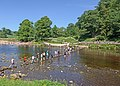 Stepping stones at Bolton Abbey.jpg
