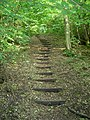 Steps, Unnamed Copse - geograph.org.uk - 933267.jpg