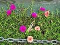 Still Life with Flowers and Chain - By Kandy Lake - Kandy - Sri Lanka (14112989906).jpg