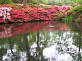 Still Pond, Isabella Plantation, Richmond Park - geograph.org.uk - 343217.jpg