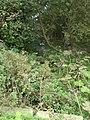 Stream between Sedgeford Carr and Eaton Farm - geograph.org.uk - 576718.jpg