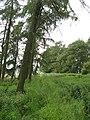 Strip wood, Walston - geograph.org.uk - 474302.jpg