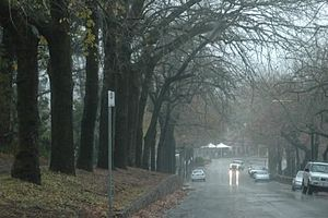 Stirling, South Australia - Looking down Druid Avenue through wet autumn weather