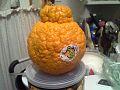 Sumō (Citrus).jpg