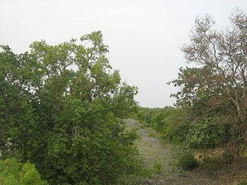 Sundarban , delta , forest 02.jpg