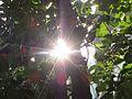 Sunrays^ tirupati AP - panoramio.jpg