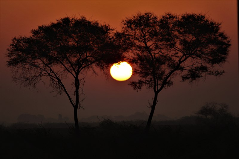 File:Sunrise @ Jamnagar (Khijadiya Bird sanctuary).jpg