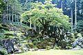 Suwa Yakata-ato Garden 200608.jpg
