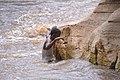 Swimmer, Sof Omer, Ethiopia (14496428929).jpg