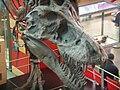 T. rex skull CAS 3.JPG