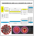 TAXONOMÍA SARS-CoV-2.png