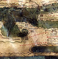 Tabula Peutingeriana Pentapolis.jpg