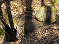 Tachovsky vodopad 02.jpg