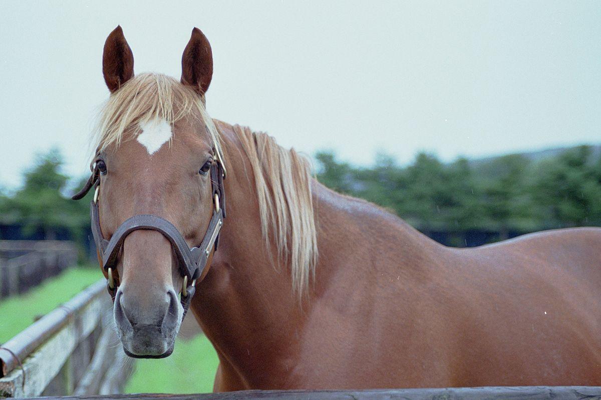 Stud Muffin Horse Treats Dog