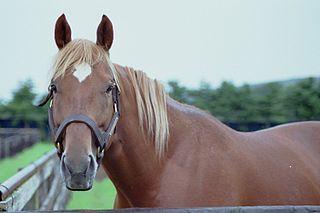 Taiki Shuttle American-bred Thoroughbred racehorse