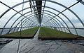 Taimi Tapio greenhouse inside.jpg