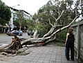 Taipei after Typhoon Soudelor 2015 03.jpg